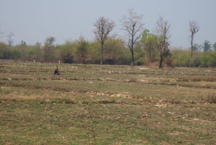 Agicuiture  Land (5)