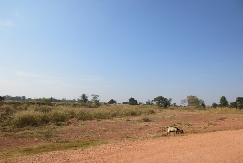 Agriculfure  Land for sale (1)
