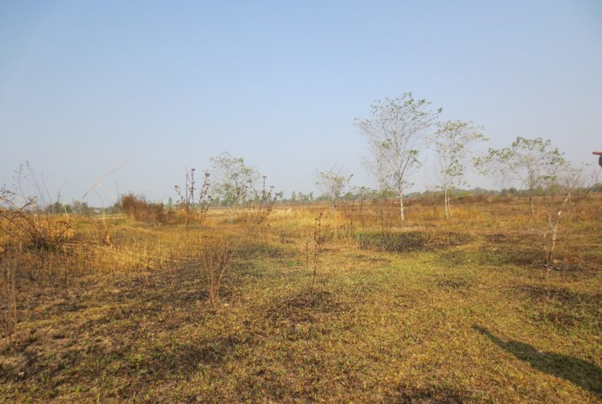 Agriculture Land (1)