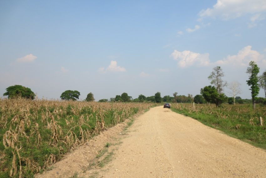 Agriculture Land (16)