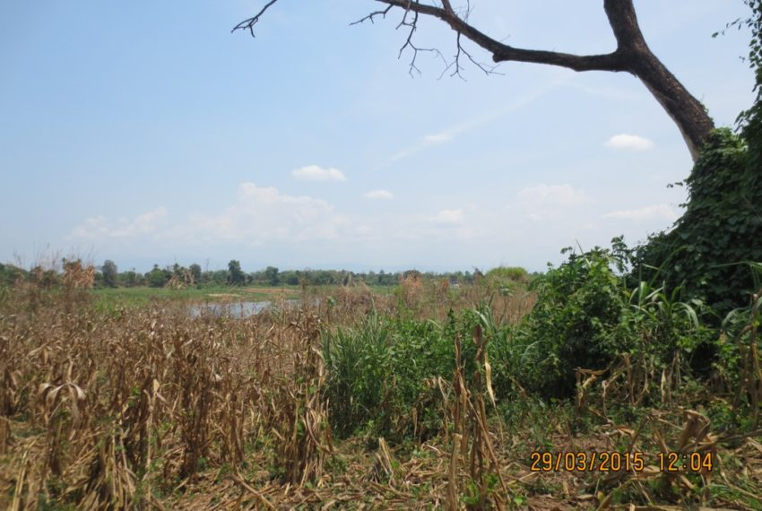 Agriculture Land (24)