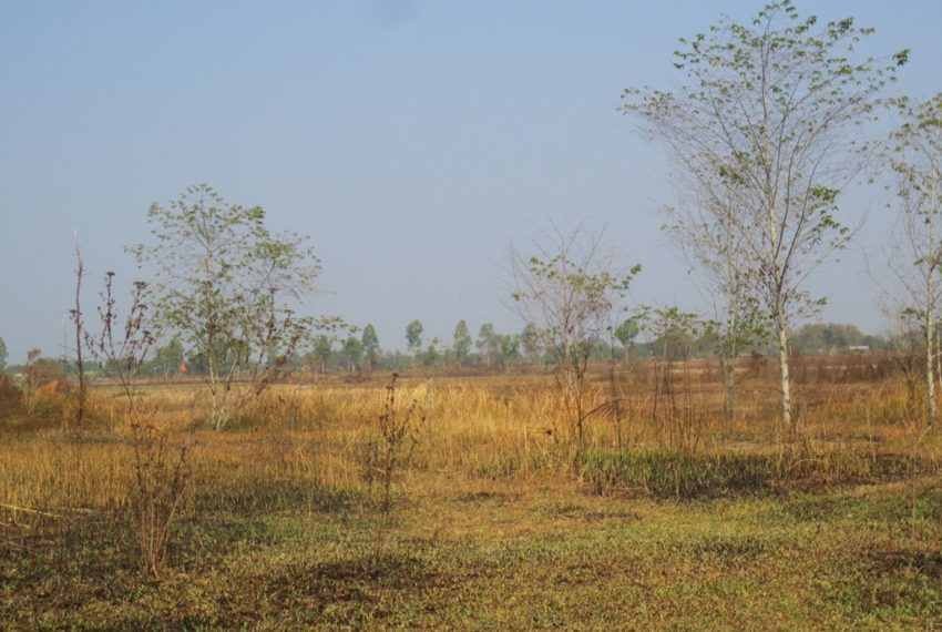 Agriculture Land (6)