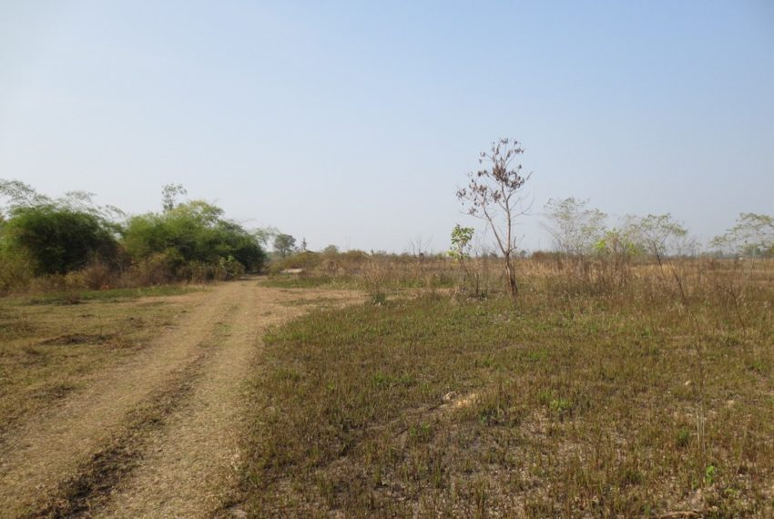 Agriculture Land (9)
