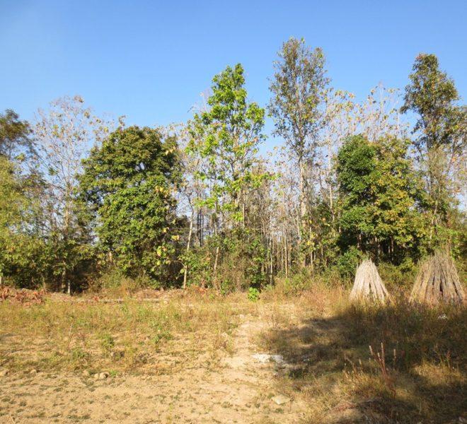 Agriculture land Foir Sale (1)