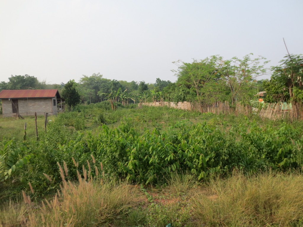 Agriculture For Sale Real Estate Houses For Sale Rentals Commercial And Businesses For Sale At Realestateinlaos Com